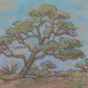Sold   Boonzaier, Gregoire   Large Tree