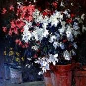 Sold | Boshoff, Adriaan | Still Life