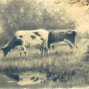 Sold  De Jongh, Tinus   Cattle grazing