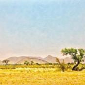 NO25- Walter Meyer, Landscape with Kameeldoring tree