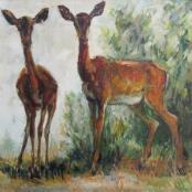 Sold | Eloff, Zakkie | Impala