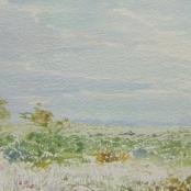 Sold   Jentsch, Adolph   Bushveld Landscape