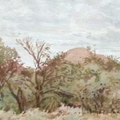 Sold   Jentsch, Adolph   Bushveld