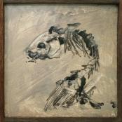 Den Heijer, Klara- Marie | Droe vis