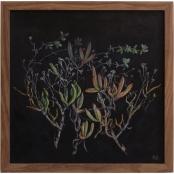 Human, Ronel | Aizoaceae Succulents