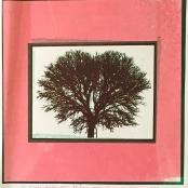 Neethling, Jan | Trees