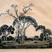 Sold   Pierneef, JH   Bosveld, Noord Transvaal